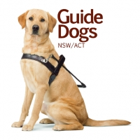 Guide Dogs Puppy Raising Nsw