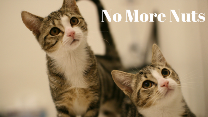 No more nuts desexing cats saves lives chuffed non profit no more nuts desexing cats saves lives chuffed non profit charity and social enterprise fundraising publicscrutiny Image collections