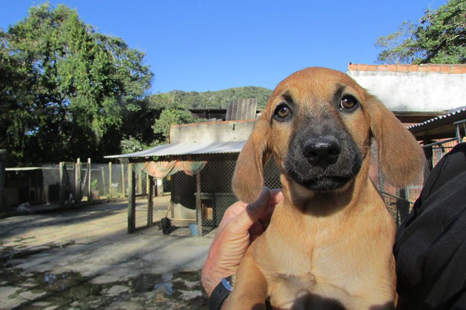A Home for 'Dogs in Brazil' | Chuffed