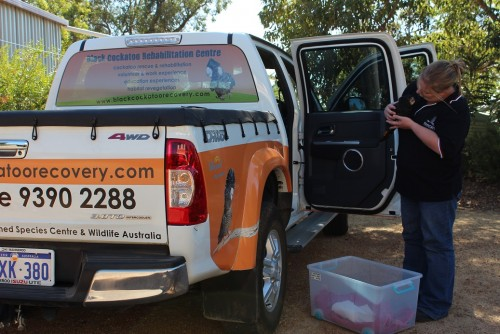 Our cockatoo ambulance on a rescue